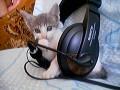 Animale - DJ Cat